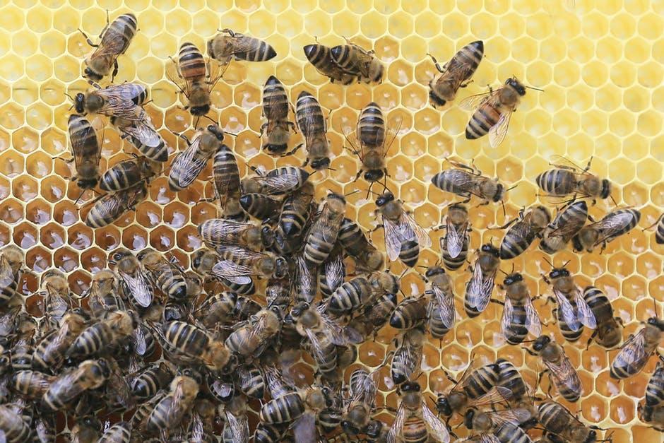 netwerk van bijen