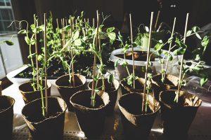 Verschillende planten in potten